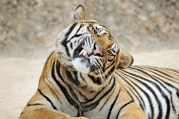 animal-dentist
